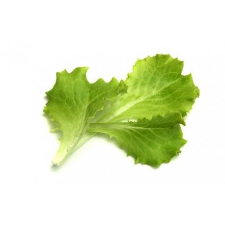 Baby leaf biondo