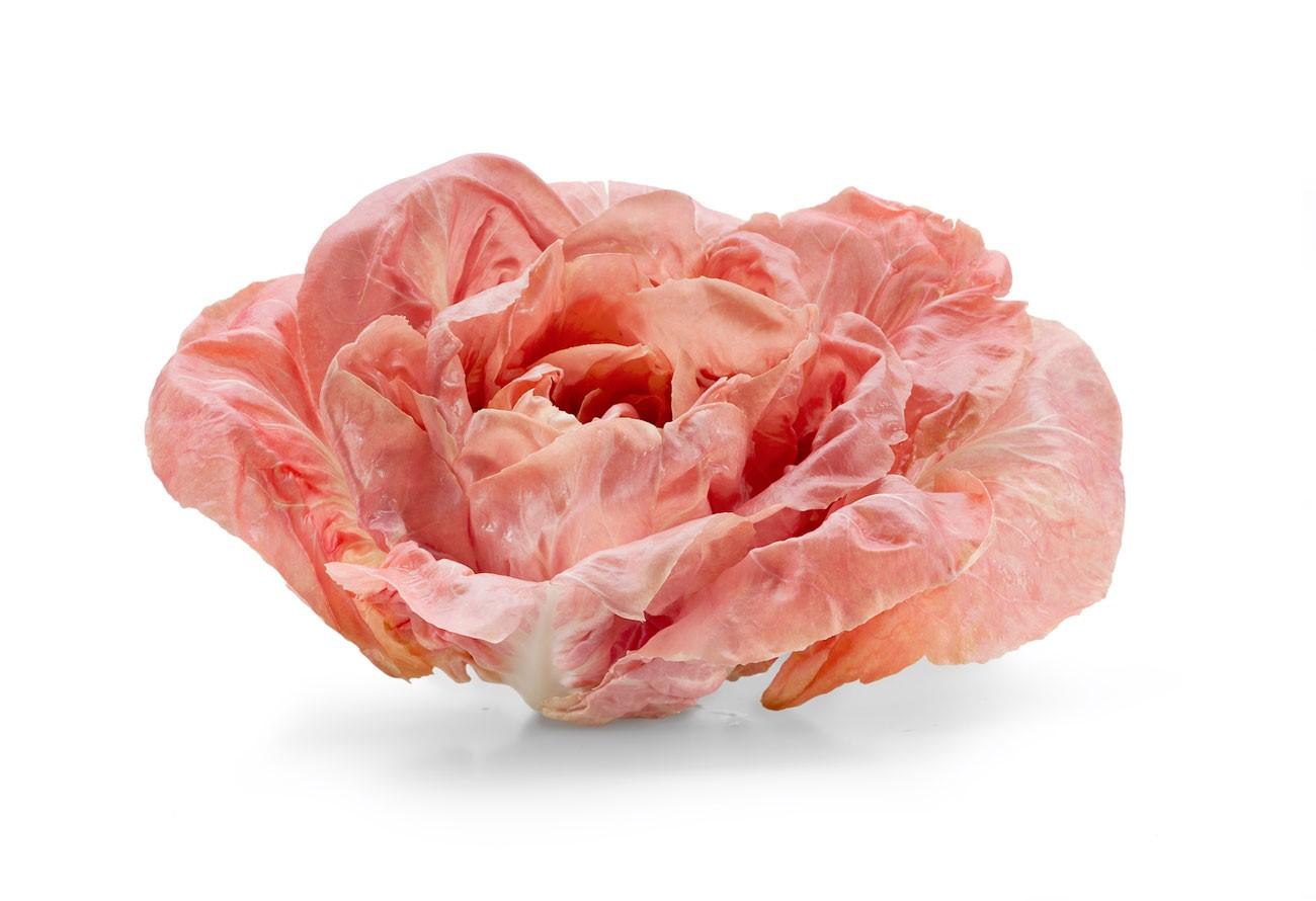 Radicchio rosa