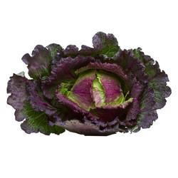 Red savoy cabbage
