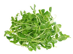 Peas sprouts