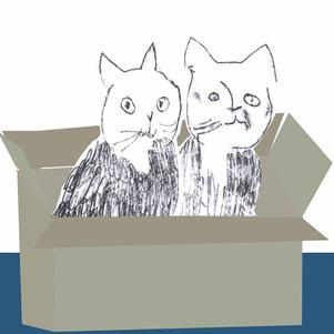 Kittens Box Helen Minns