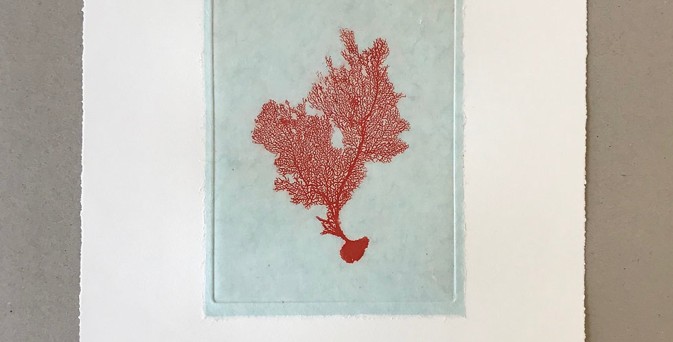 Sea Fan II (Red)