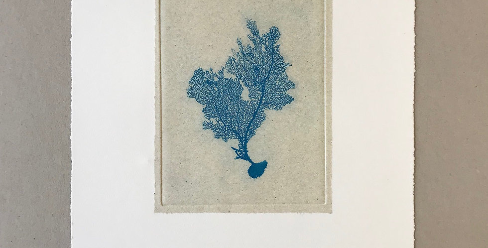 Sea Fan II (Blue)