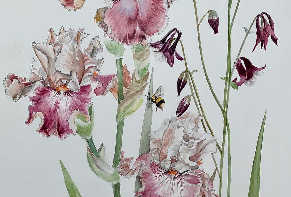 Irises and Aquilegia