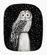 Tawny owl for web II.jpg