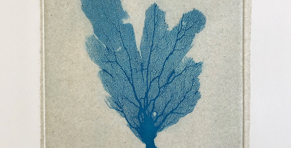 Sea Fan I (Blue)