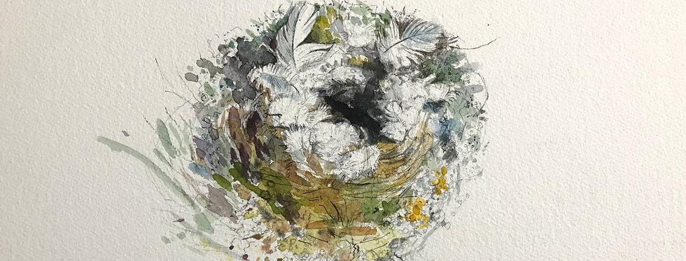 Goldcrest Nest