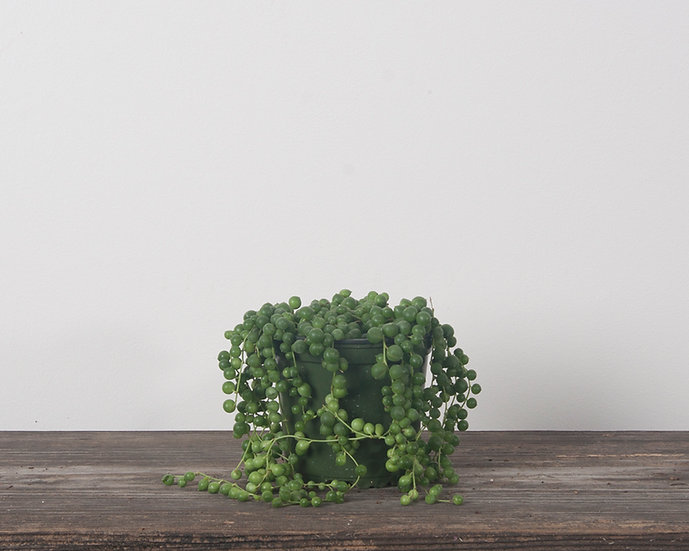 """4"""" String of Pearls"""