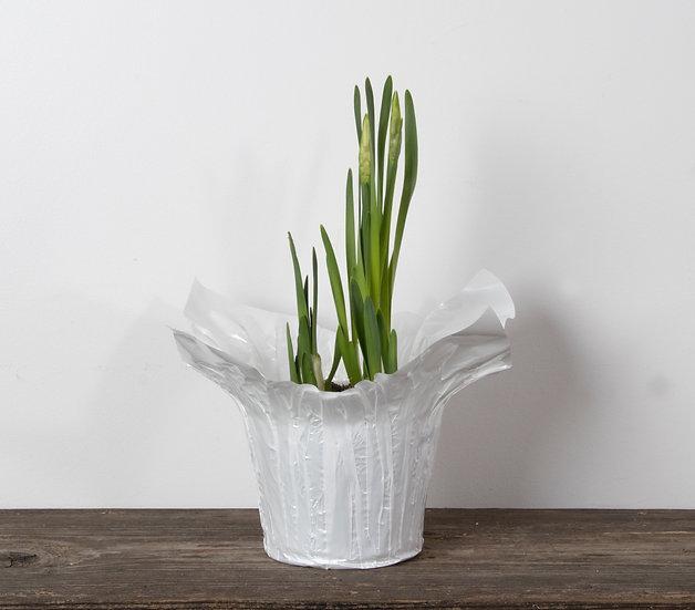 """6"""" Paper White Narcissus"""