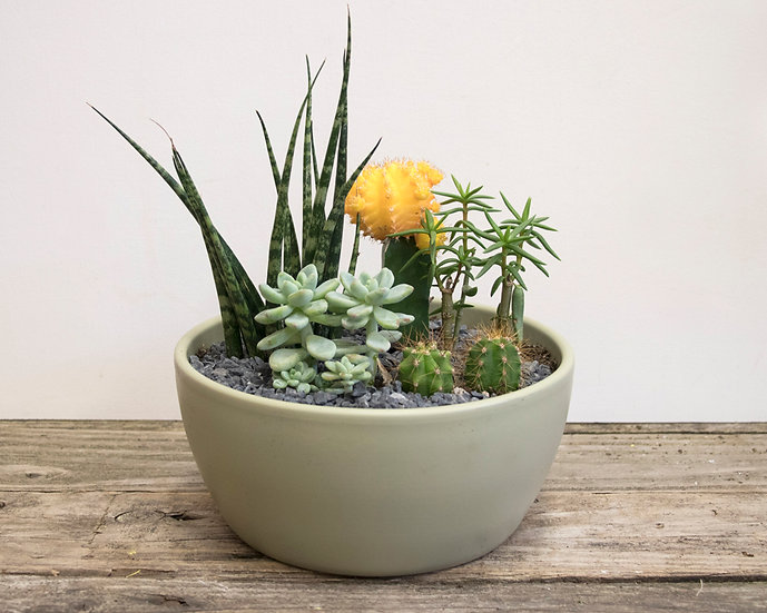 """7"""" Cacti & Succulent Planter"""