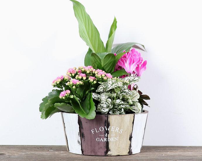 """8"""" Flower and Garden"""