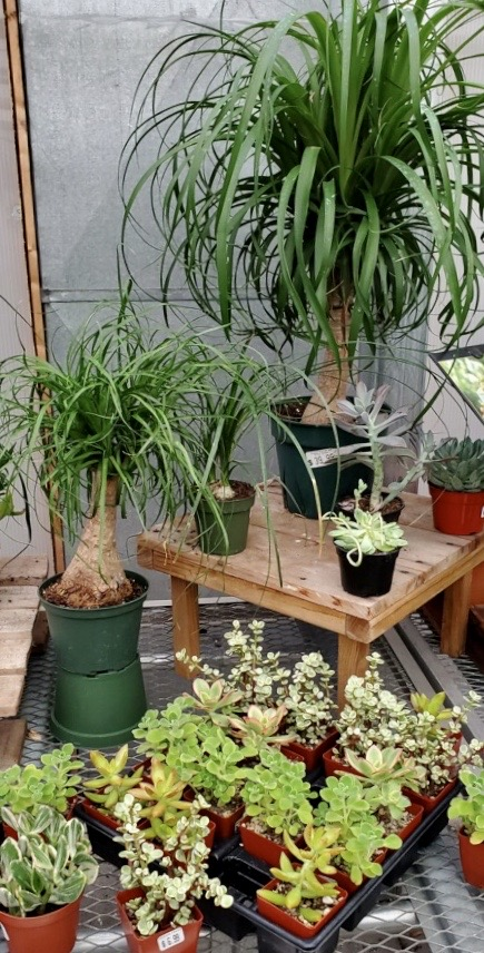 Easy to care for plants.