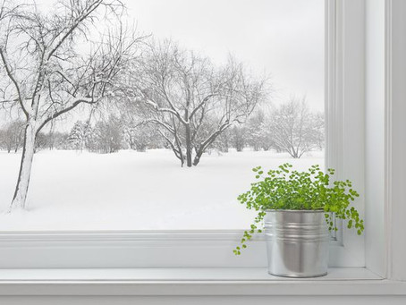 Winter House Plant Care