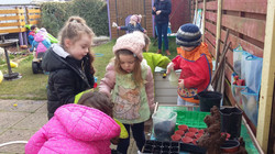 More seed planting