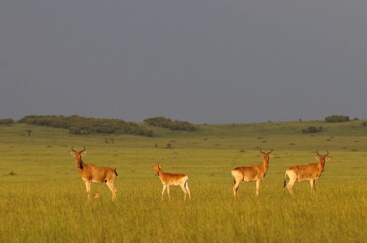 Kenya10_D307983