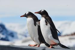 Antarctica2017_day7_D856667