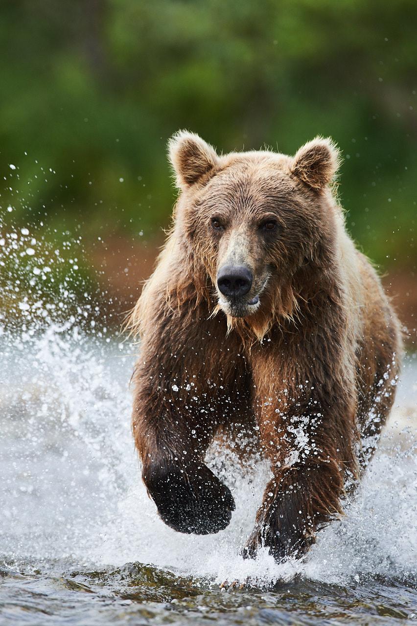 Alaska2012_D4S6834