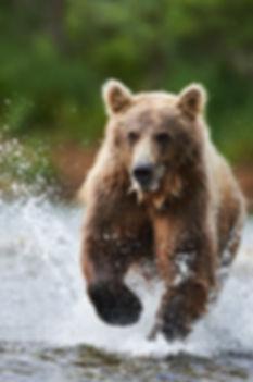 Alaska2012_D4S6834.jpg