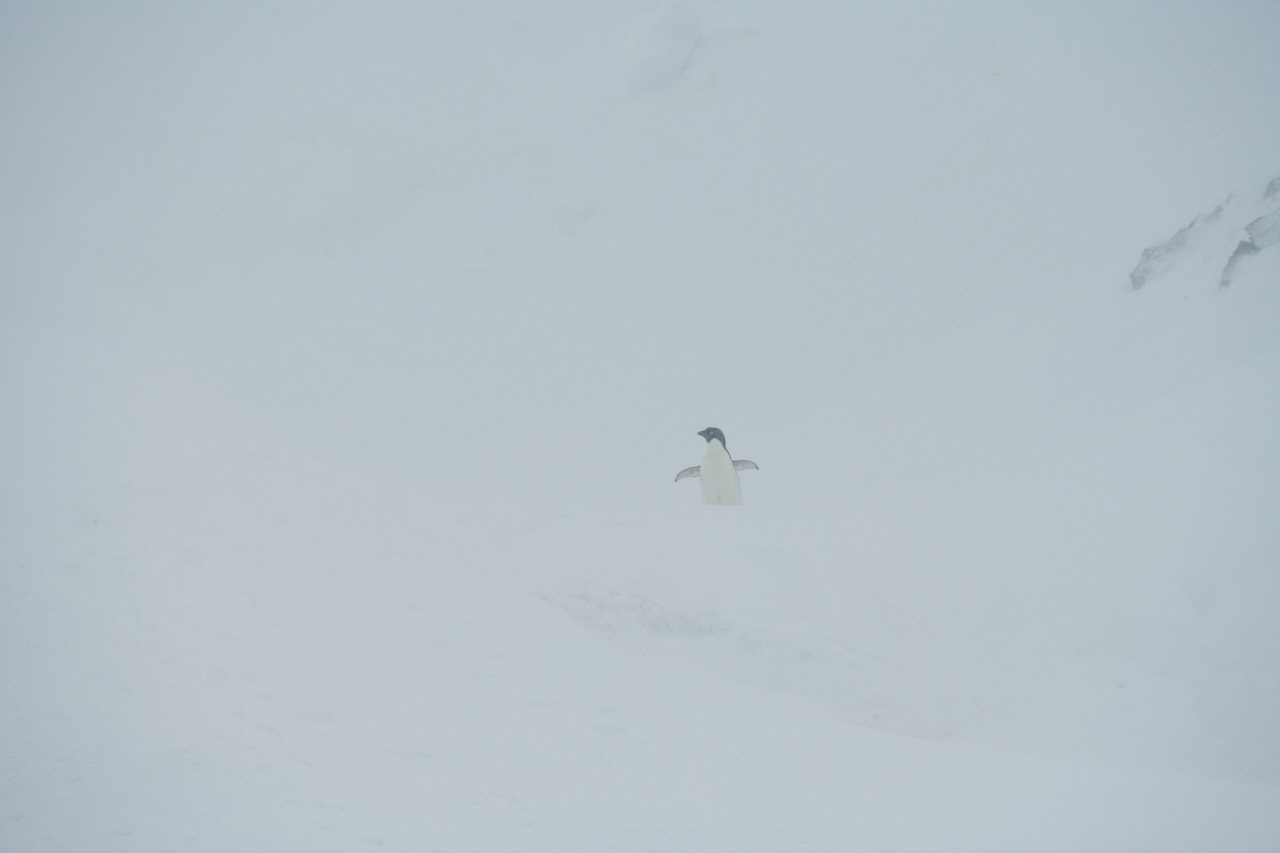 Antarctica2017_day12_D855471