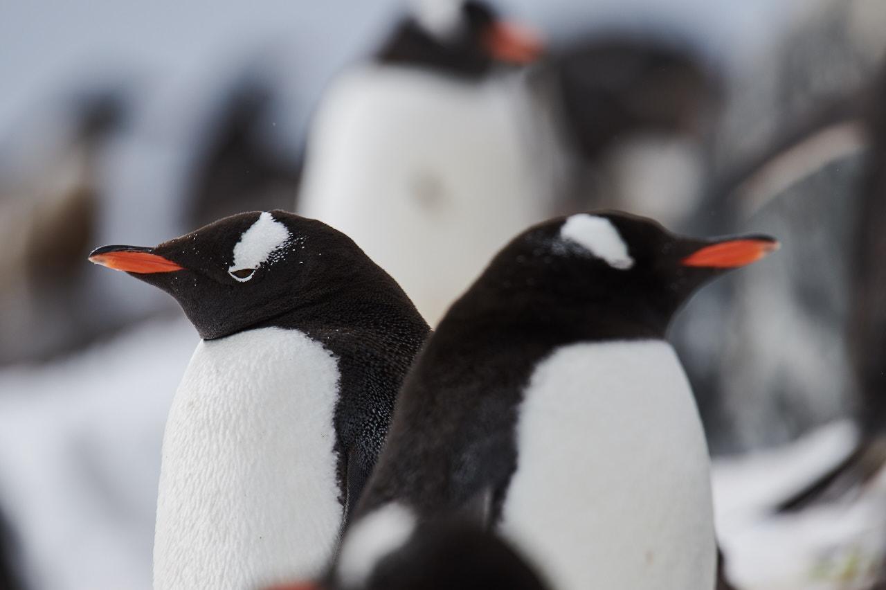 Antarctica2017_day6_D854434