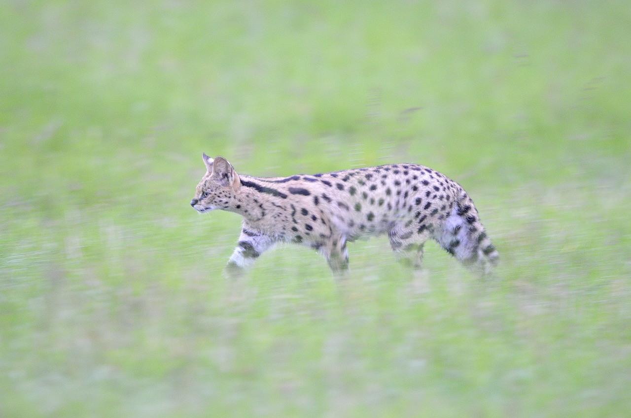 Kenya10_D306108
