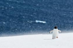 Antarctica2017_day7_D856310