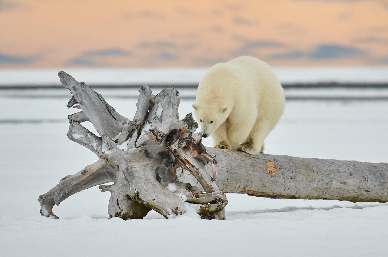 Alaska2013_D7M5850