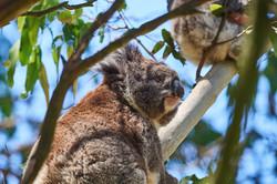 Australie2017_day8_D5S3112