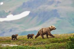 Alaska2012_D4S5224