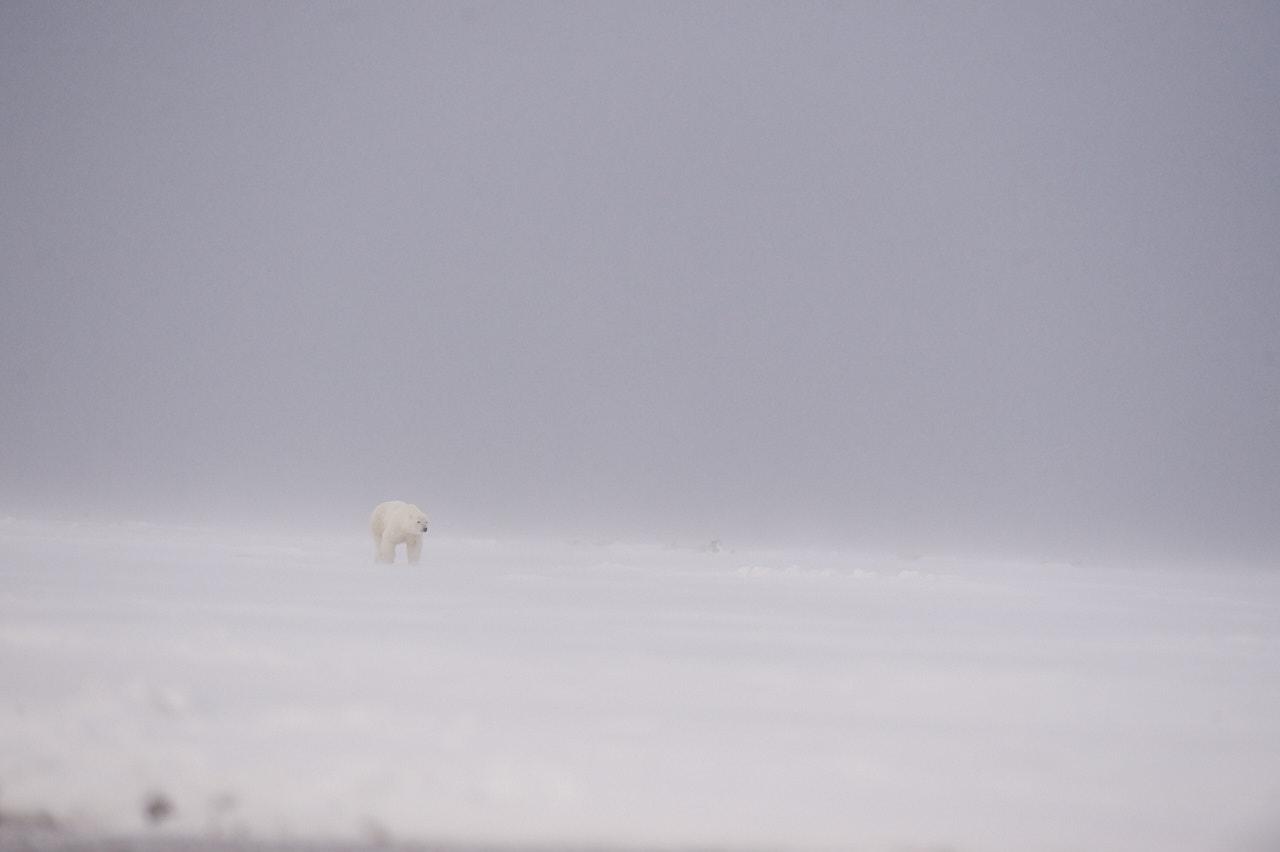 Alaska2013_D4S7768