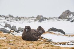 Antarctica2017_day12_D5S3677