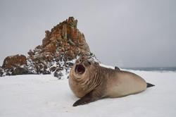 Antarctica2017_day12_D5S4134