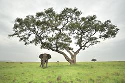 Kenya10_D7X0831