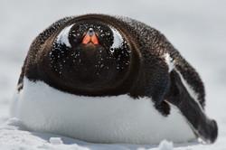 Antarctica2017_day6_D854620