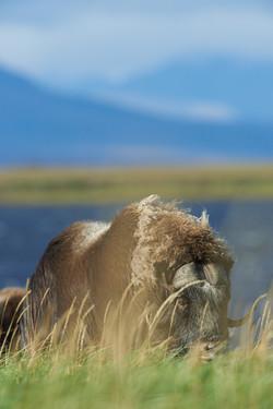 Alaska2012_D4S2760_01