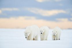 Alaska2013_D4S7262