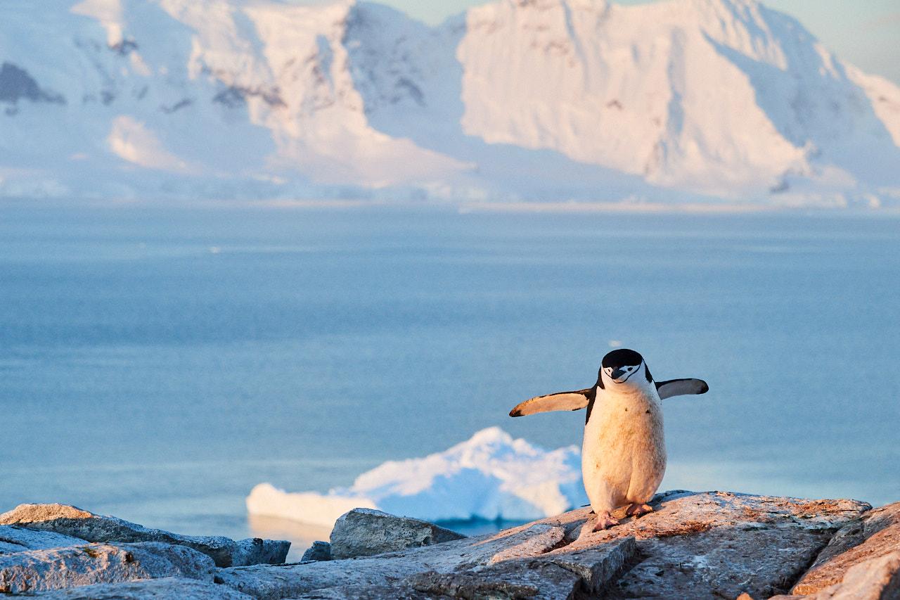 Antarctica2017_day5_D5S9839