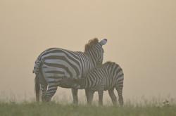 Kenya10_D302131