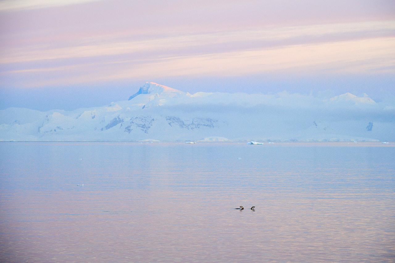 Antarctica2017_day7_D5S0297