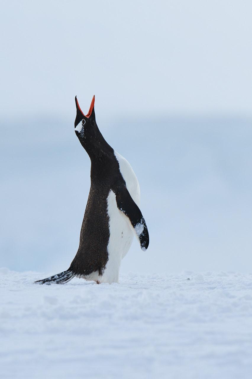 Antarctica2017_day6_D854154