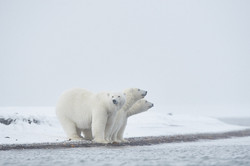 Alaska2013_D4S9722