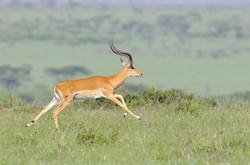 Kenya10_D306817