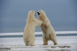 Alaska2013_D4S3396