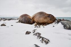Antarctica2017_day12_D5S3455