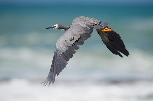 Autres oiseaux