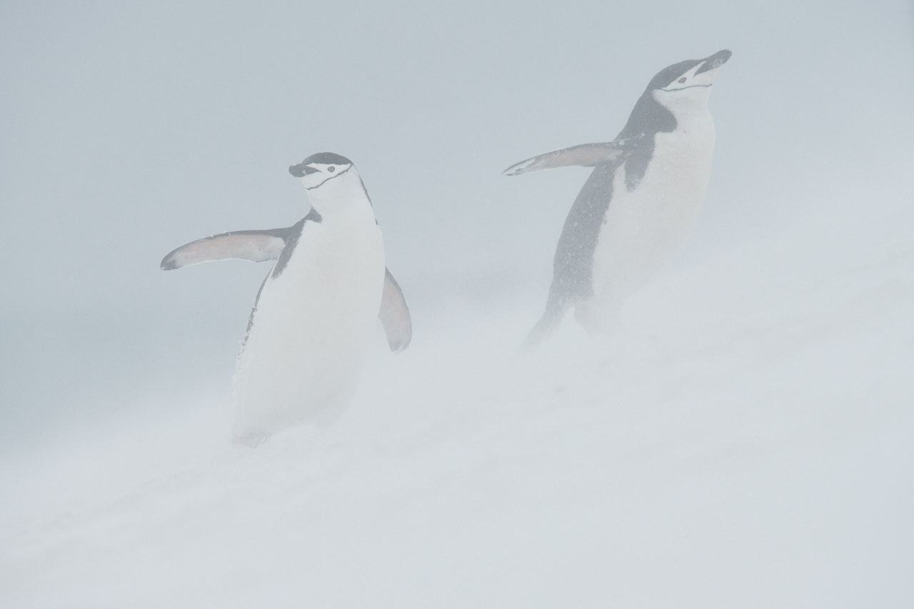 Antarctica2017_day12_D854377