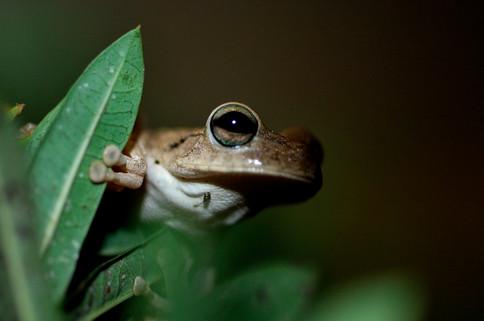 Amphibiens & insectes
