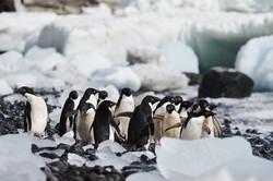 Antarctica2017_day5_D852934