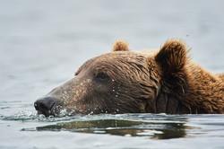 Alaska2012_D4S8457