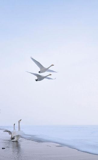 K1_Birds_Japon13_D7M2459.jpg